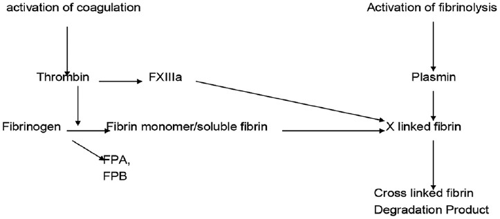 Figure 1: FPA and FPB-Fibrinopeptied A and B. D dimer production (from Wakai <i>et al</i>, 2003